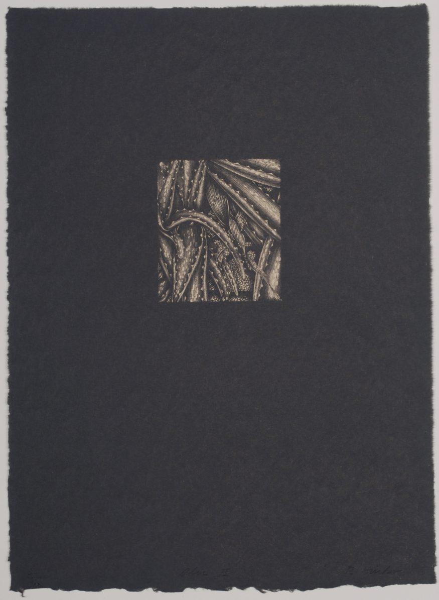 "Aloe II – 15"" x 11"" Lithograph on Kitakata"