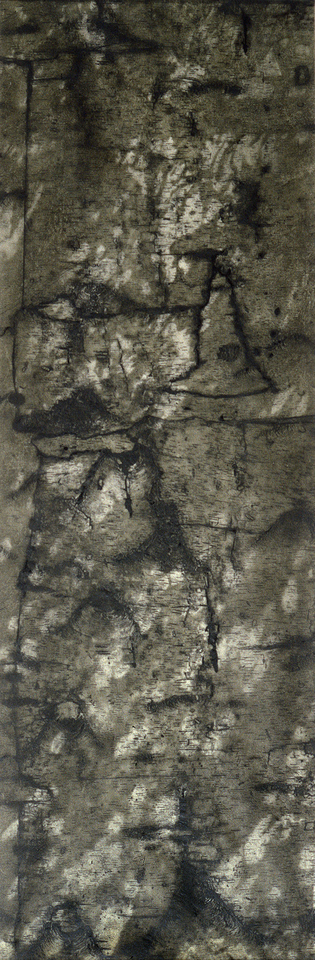 "Birch I - – 70"" x 23"" Bark Intaglio and Rust Monoprints on Okawara"