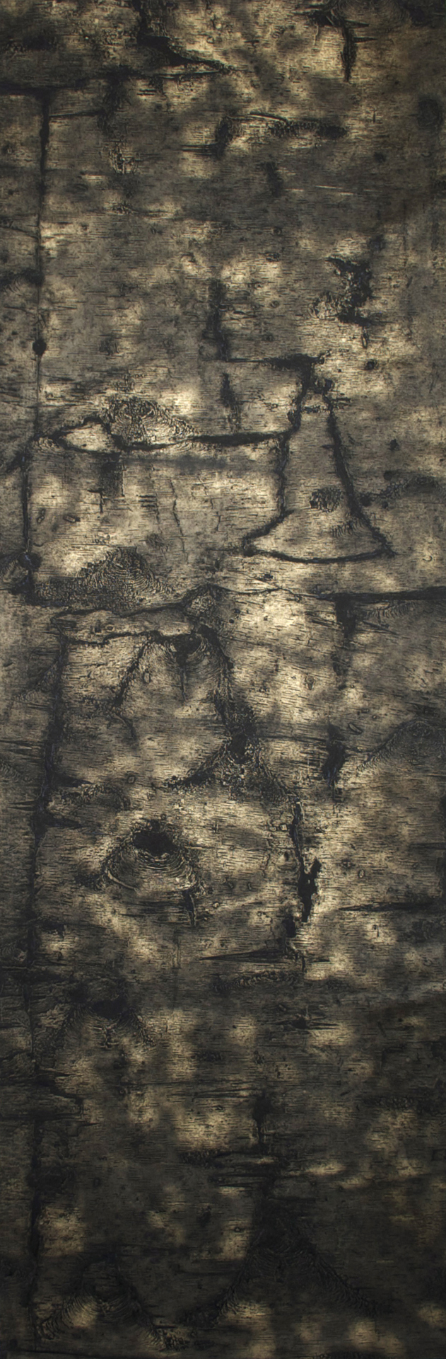 "Birch II – 70"" x 23"" Bark Intaglio and Rust Monoprints on Okawara"