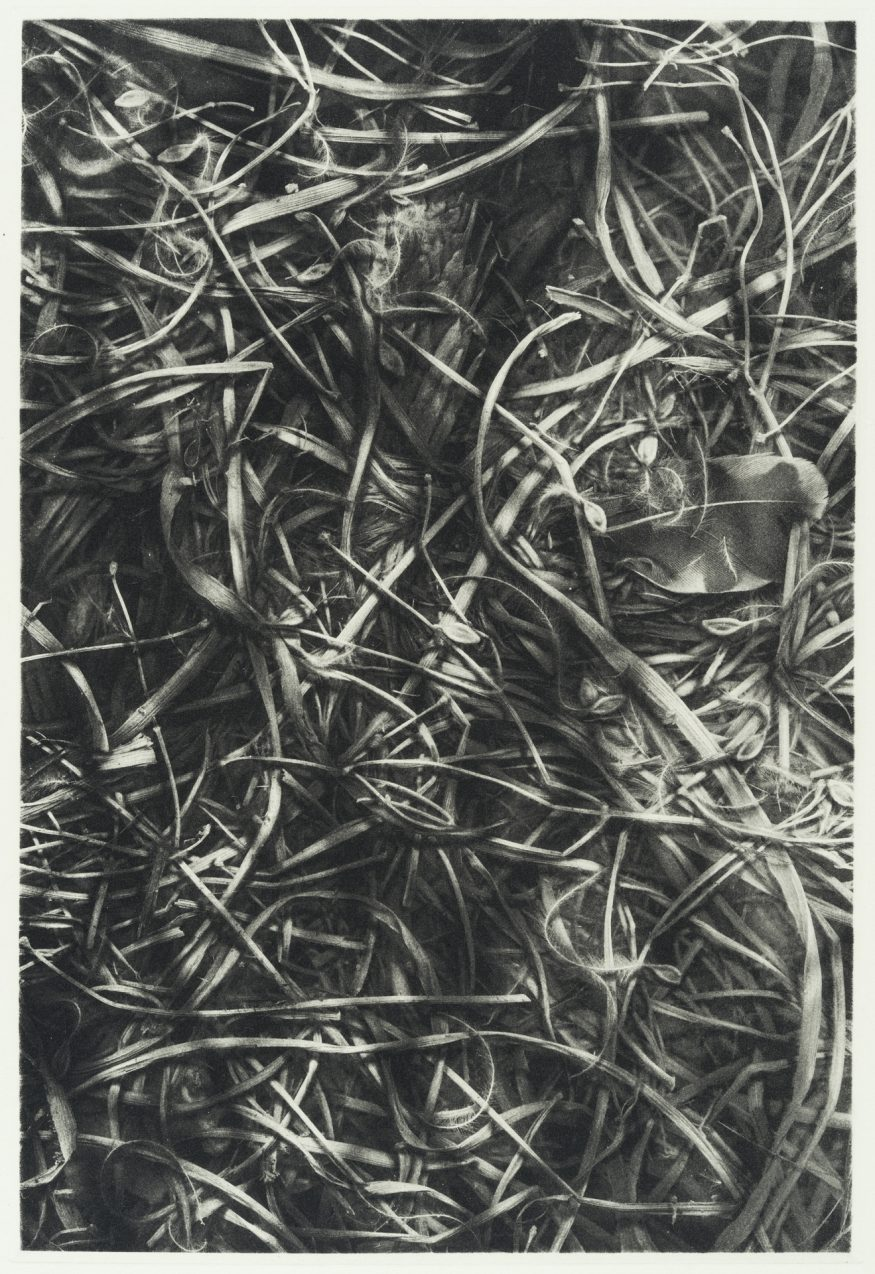 "Covert II – 20"" x 16"" Copperplate Photogravure on Somerset Satin"
