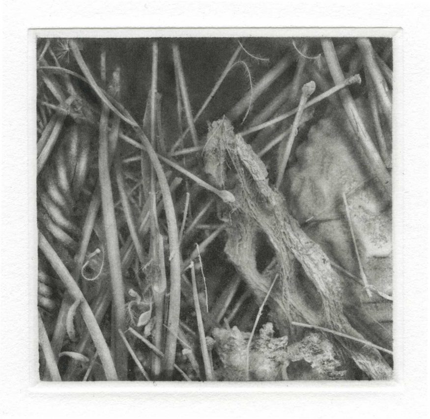 """Curios I – 10"""" x 8"""" 20"""" x 16"""" Copperplate Photogravure on Somerset Satin"""