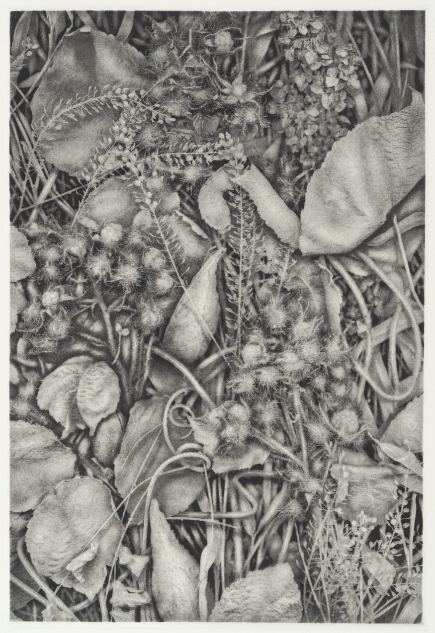 """Curios IV – 20"""" x 16"""" Copperplate Photogravure on Somerset Satin"""