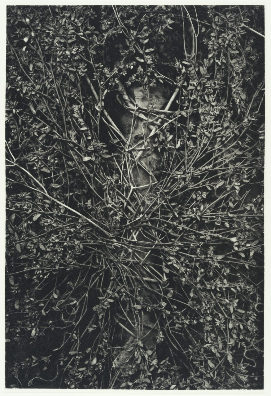 "Growth I – 20"" x 16"" Copperplate Photogravure on Somerset Satin"