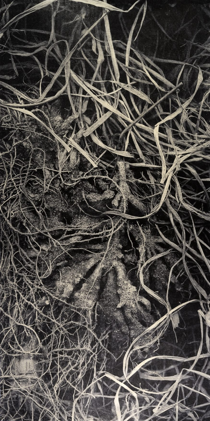 "Root II – 48"" x 24"" Woodblock on Kitakata"