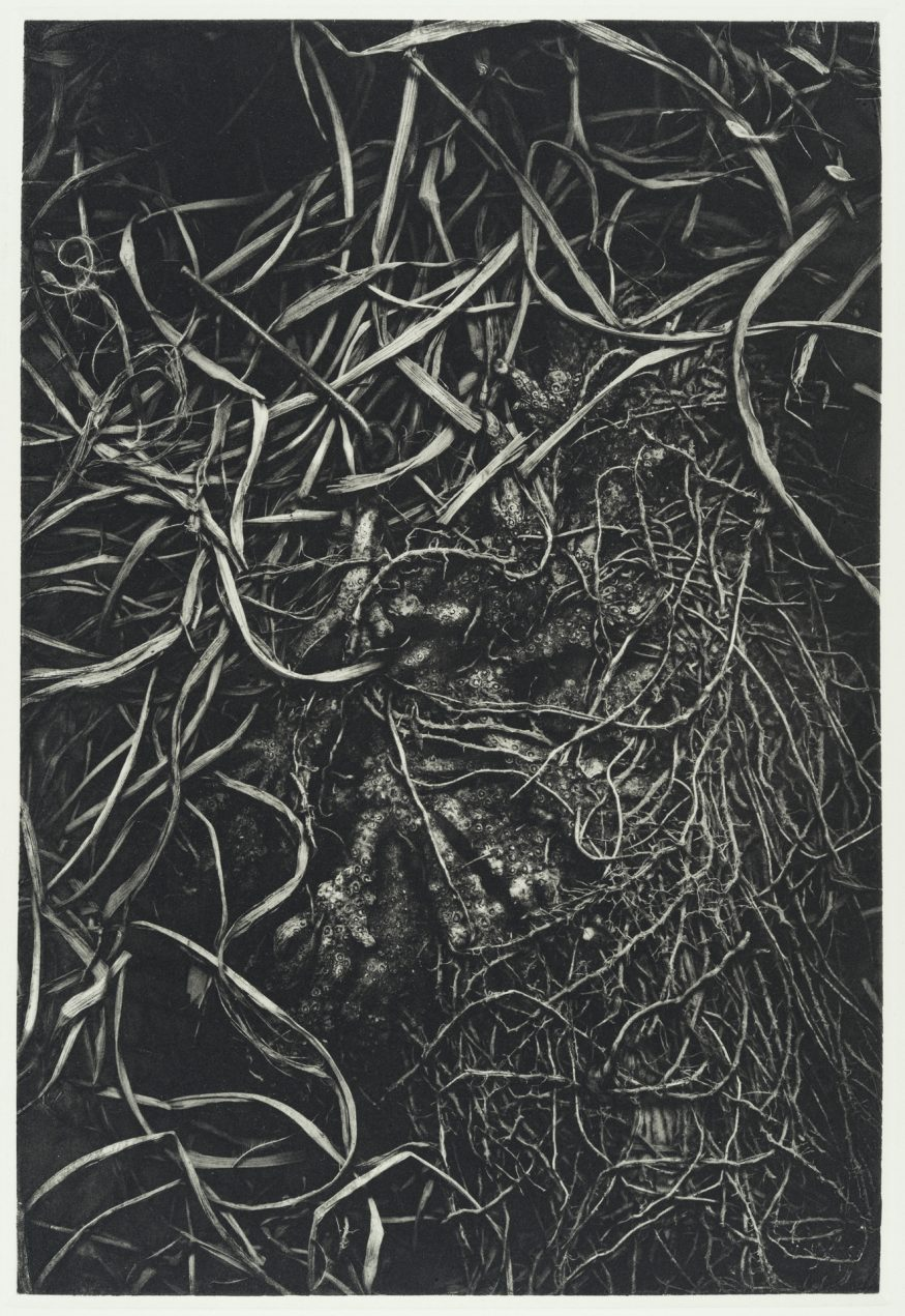 "Root I – 20"" x 16"" Copperplate Photogravure on Somerset Satin"