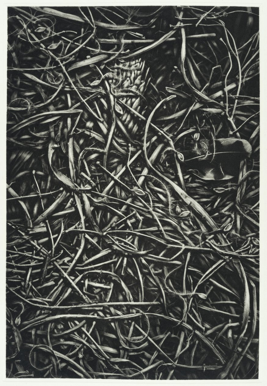 "Straw I – 20"" x 16"" Copperplate Photogravure on Somerset Satin"
