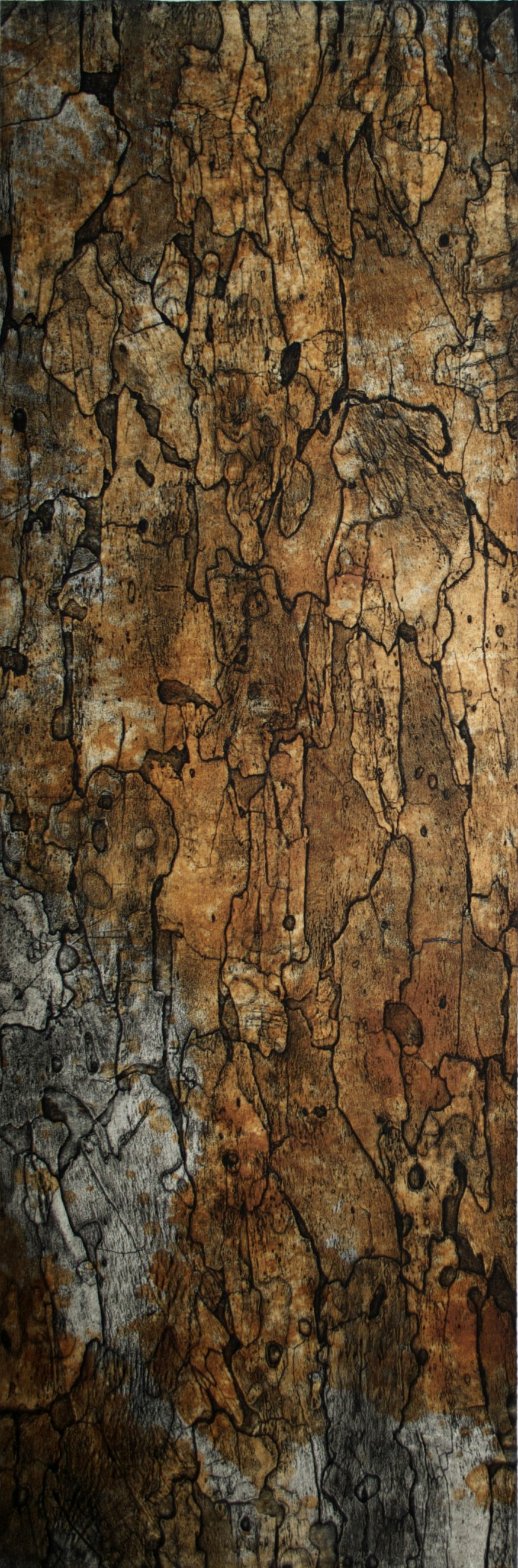 "Sycamore I – 70"" x 23"" Bark Intaglio and Rust Monoprints on Suzuki"